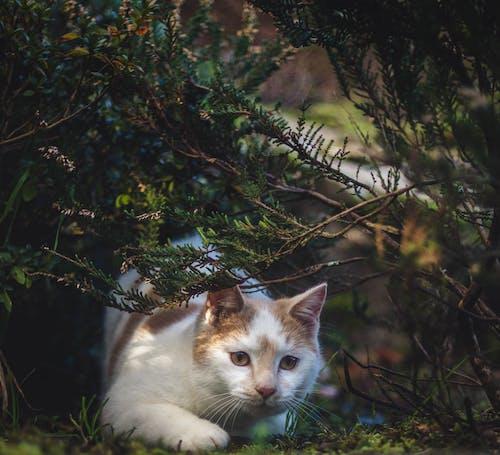 Free stock photo of cat, cute, cute animal