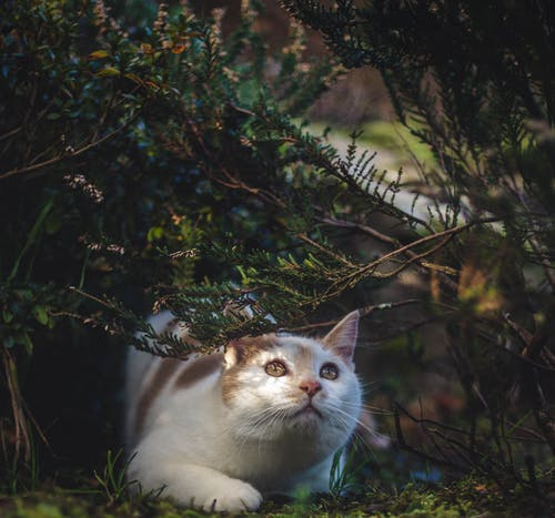 Cat Under Bushes