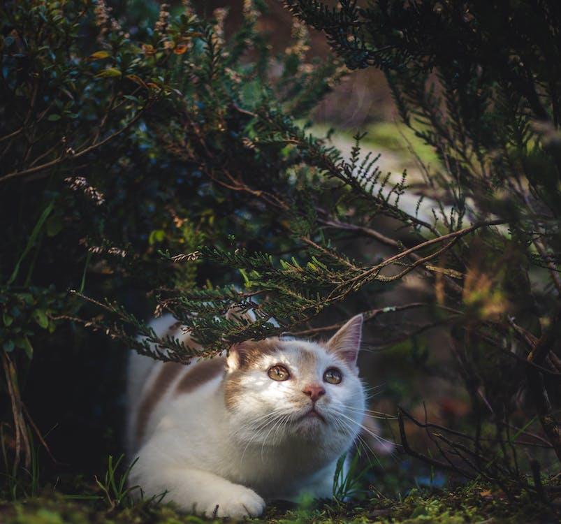 Photos gratuites de adorable, animal, animal de compagnie