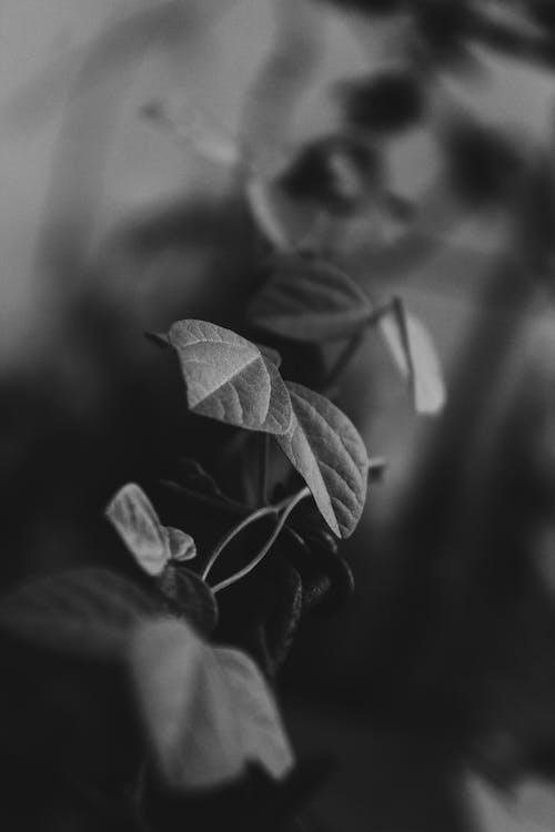 Imagine de stoc gratuită din frunză, fundal negru