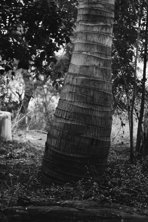 Imagine de stoc gratuită din arbore, fundal negru