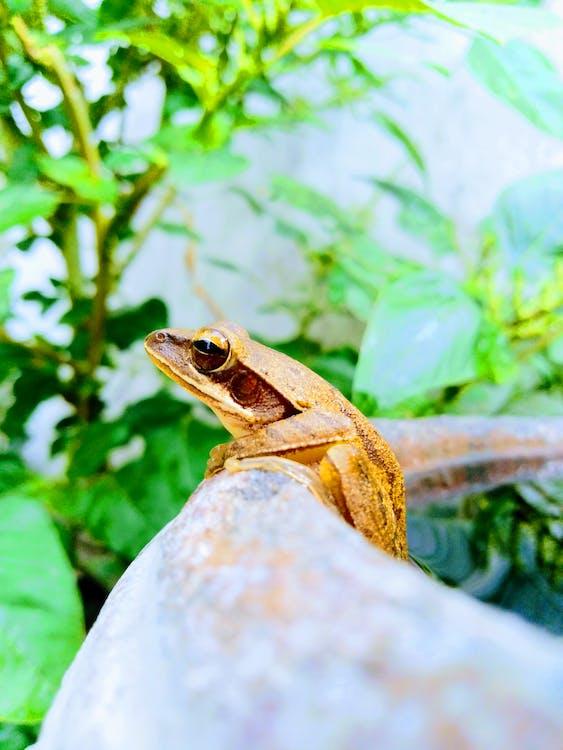 Imagine de stoc gratuită din animal sălbatic, fotografia mobilă, fotografie mobilă