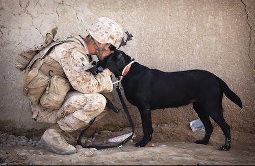 Kostnadsfri bild av armén, enhetlig, hjälp, hund