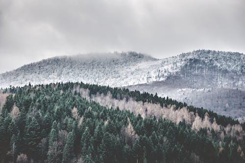 Photos gratuites de arbres, forêt, forêt noire, hiver