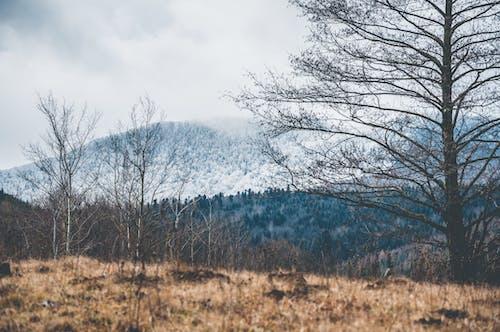 Photos gratuites de arbres, fond sombre, forêt, forêt noire