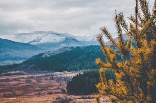 Photos gratuites de hiver, montagnes, neige, pin