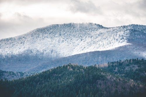 Photos gratuites de forêt, forêt noire, hiver, montagnes