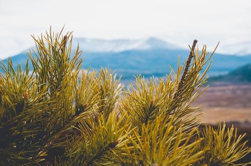 Photos gratuites de blue mountains, hiver, montagnes, neige