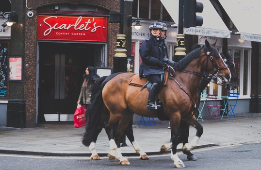 Free stock photo of street, festival, horses, military