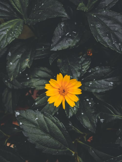 Free stock photo of flower, leaf, minimalistic