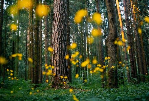 Gratis stockfoto met bloemen, bomen, Bos, bossen