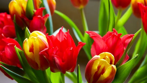 Gratis stockfoto met bloemen, bloemen in de lente, close-up, geel