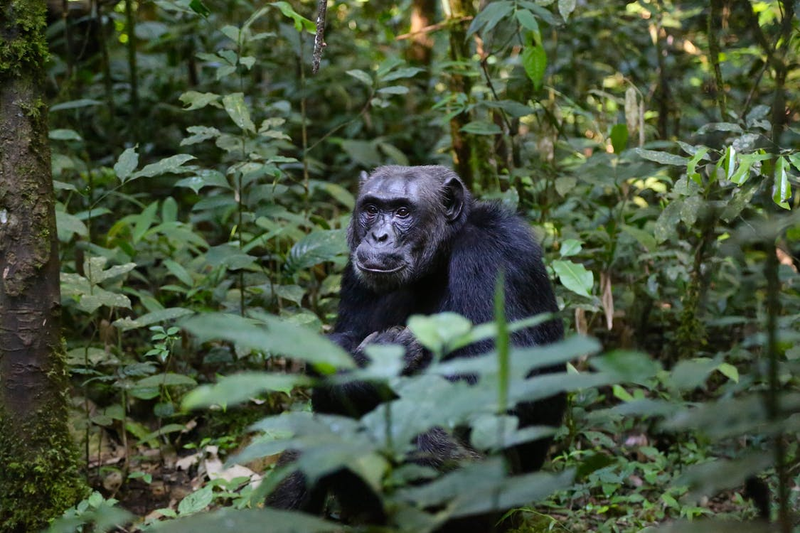 Black Gorilla Surrounded With Green Plants Close-up Photography