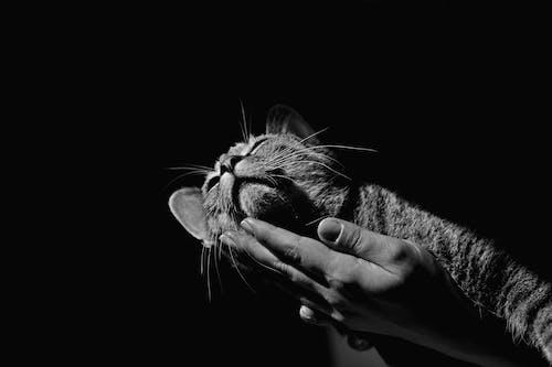 Ilmainen kuvapankkikuva tunnisteilla eläin, harmaa, harmaasävyt, käsi