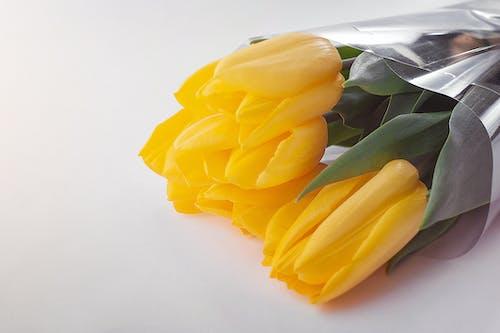 Foto profissional grátis de adorável, amarelo, amor, aniversário de casamento