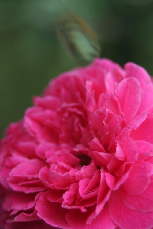 Kostnadsfri bild av blad, blommor, bokeh