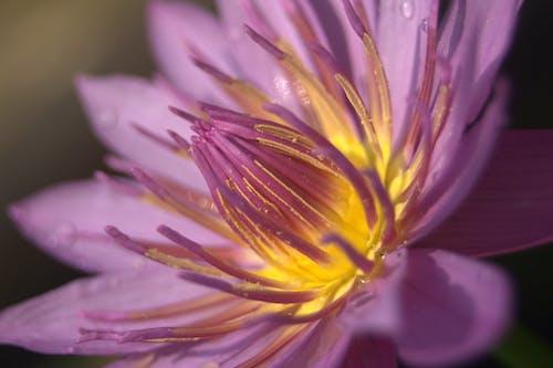 Kostnadsfri bild av blomma, blommor, bokeh