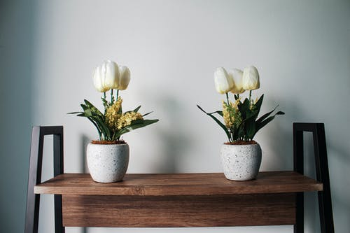 White Tulips With Pots
