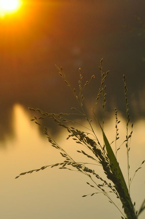 Kostnadsfri bild av blad, bokeh, flod
