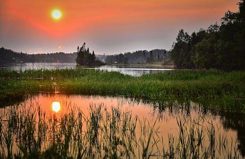 Foto stok gratis air, Fajar, hutan, lansekap