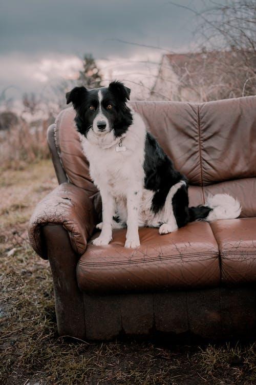 動物, 動物攝影, 哺乳動物, 坐 的 免費圖庫相片