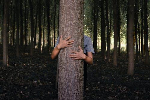 Δωρεάν στοκ φωτογραφιών με άνθρωπος, αποκρύπτω, δασικός, δέντρα
