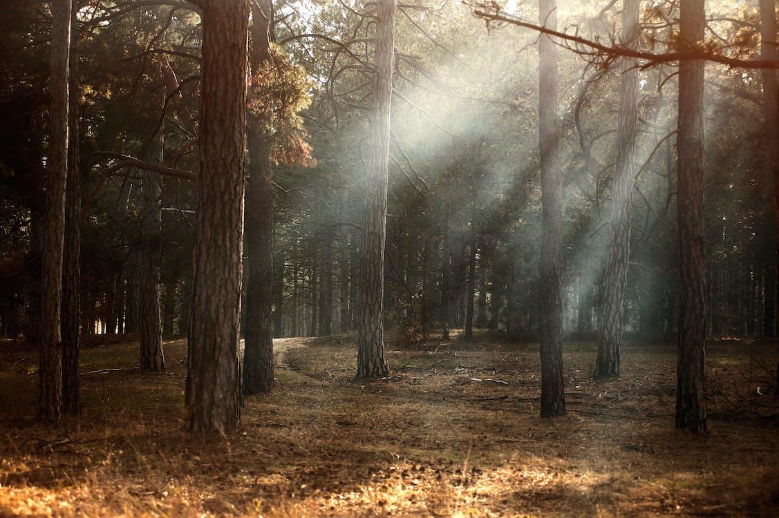 alba, amb boira, arbres