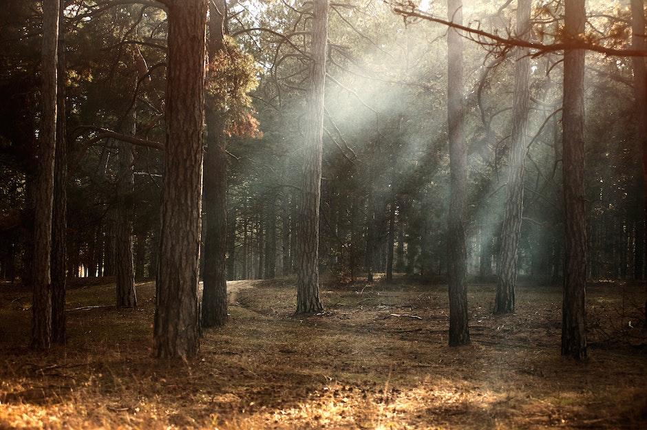 dawn, environment, fall
