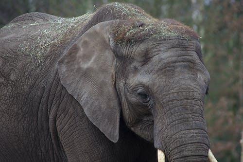 Ảnh lưu trữ miễn phí về con voi