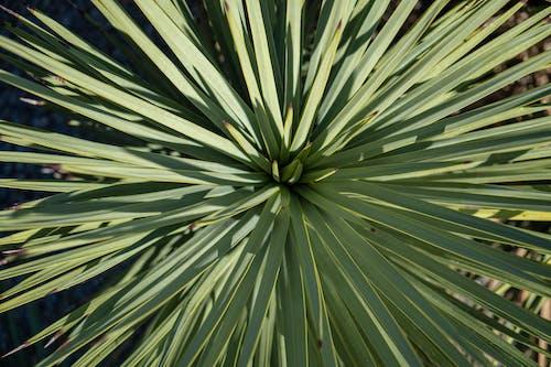 Fotos de stock gratuitas de naturaleza, planta