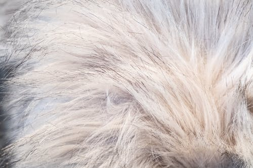 Fotos de stock gratuitas de cabello, pelo, pelo sintético, textil