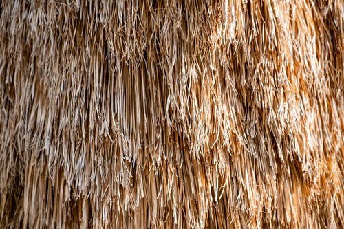 Fotos de stock gratuitas de árbol, naturaleza, palmera, planta