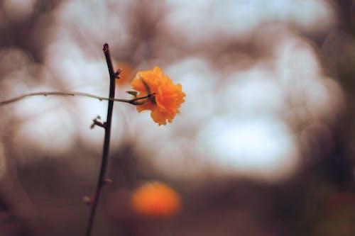 Free stock photo of beautiful flower