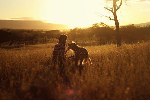 Бесплатное стоковое фото с активный отдых, восход, досуг, животное