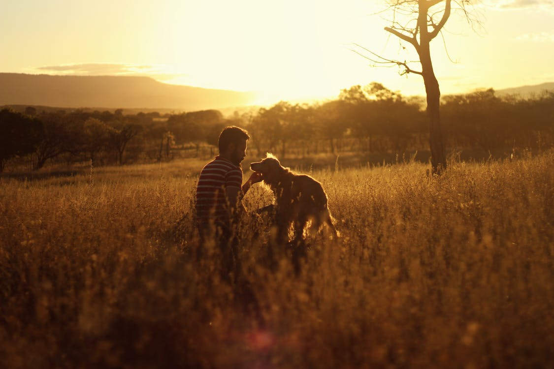 Man and Dog on Grass Field During Sunset