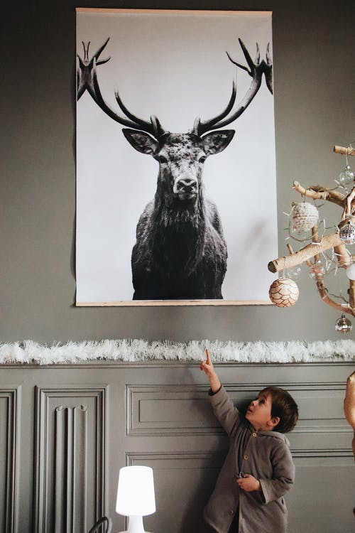 Grayscale Photography of Deer on Wall