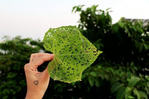 Безкоштовне стокове фото на тему «#green, #leaf, #naturelove»