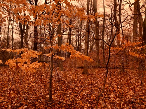 Free stock photo of autumn mood forest, forest