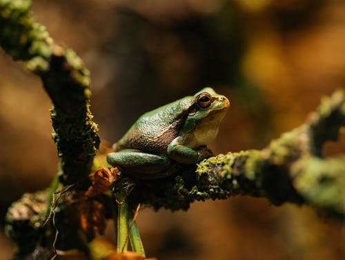 Close-up Photography of a Frog
