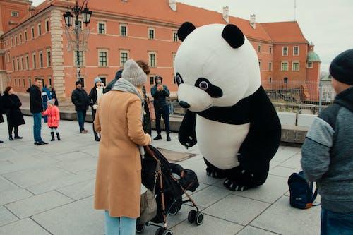 Panda içeren Ücretsiz stok fotoğraf