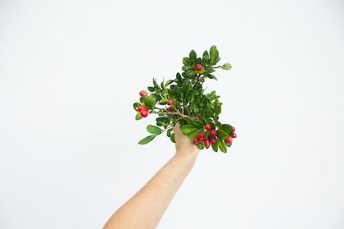 Kostenloses Stock Foto zu dunkelgrün, dunkelgrüne pflanzen, ferien, festhalten