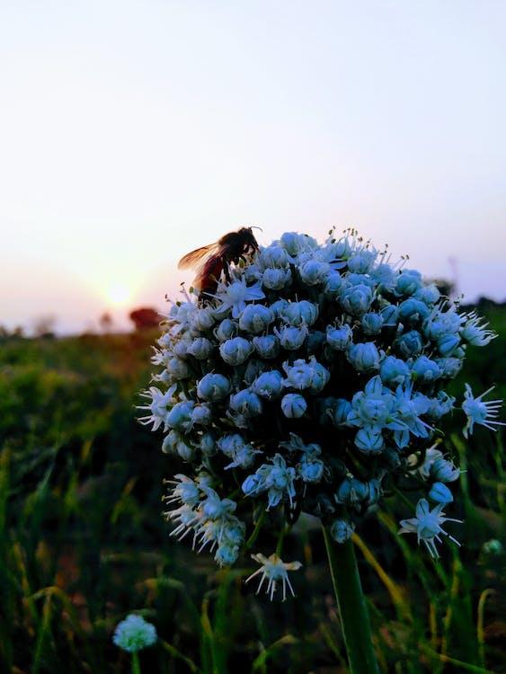 #mobilechallenge, beautiful flowers, bee