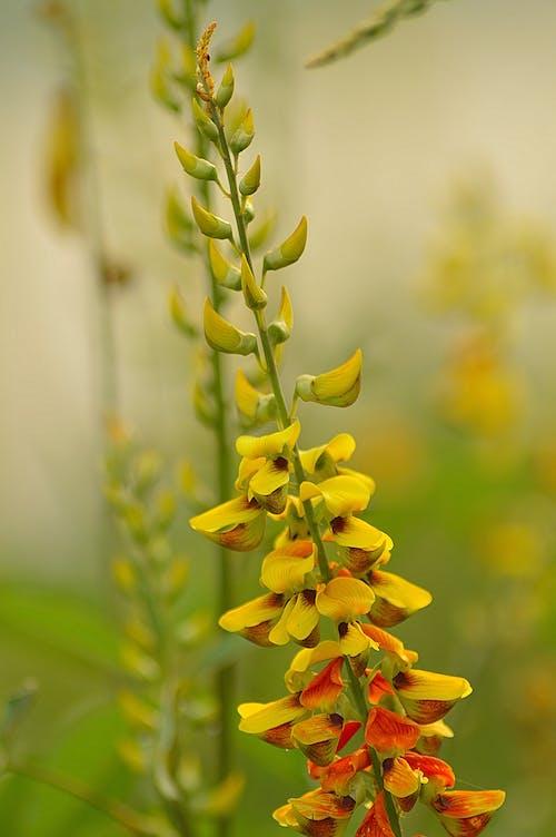 Бесплатное стоковое фото с желтые цветы, желтый цветок, красивые цветы, красивый цветок