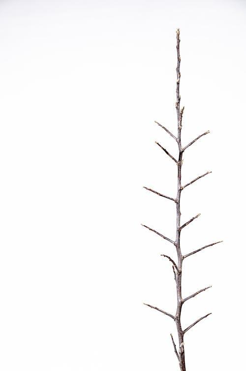 Kostnadsfri bild av enkelhet, kvistar, nakna träd, torr
