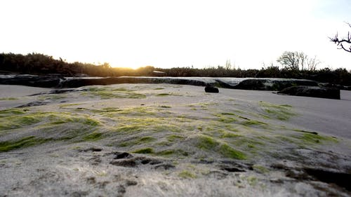 Free stock photo of algae, beach, beach sunset, snow