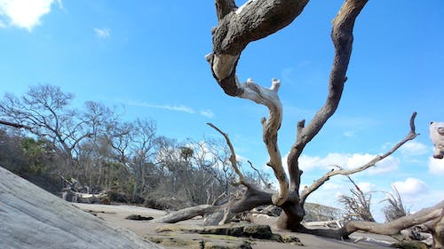 Free stock photo of beach, driftwood, florida, nature