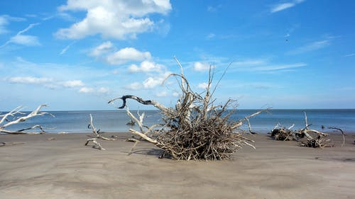 Free stock photo of beach, beach life, beatiful landscape, driftwood
