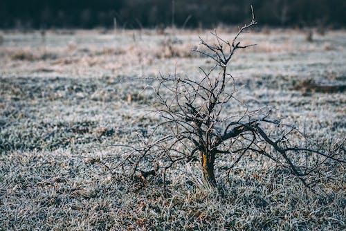 Bare Tree on Green Field