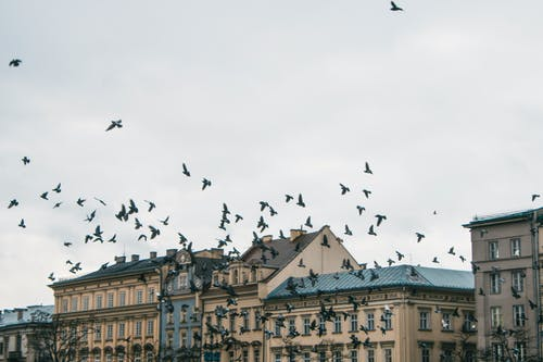 güvercinler, kuşlar içeren Ücretsiz stok fotoğraf