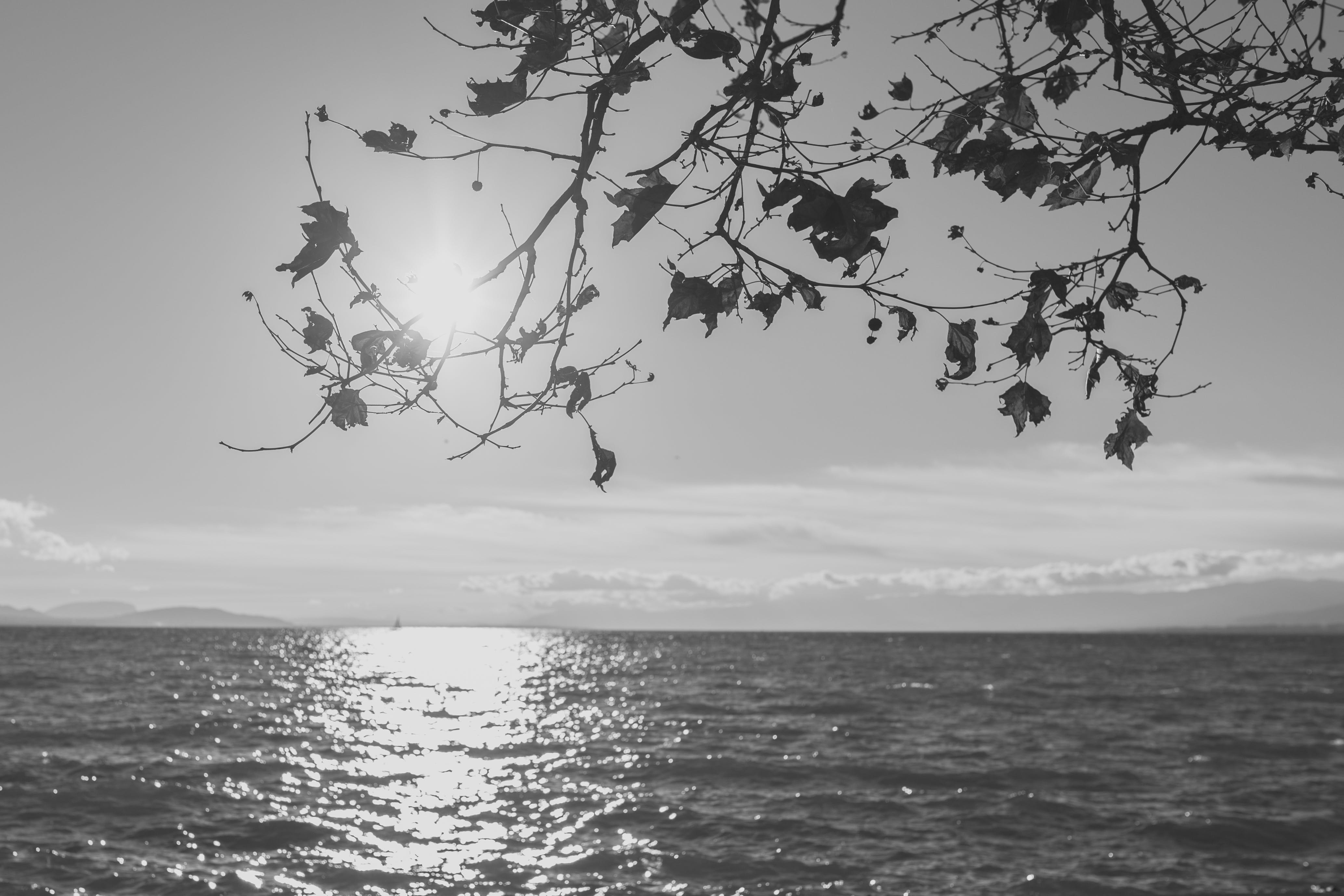 Silhouette of Tree Across Sea during Daytime